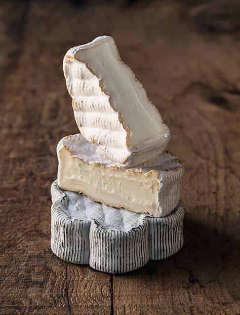 dorothy's cheese